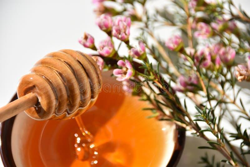 Manuka蜂蜜和树接近  免版税库存图片