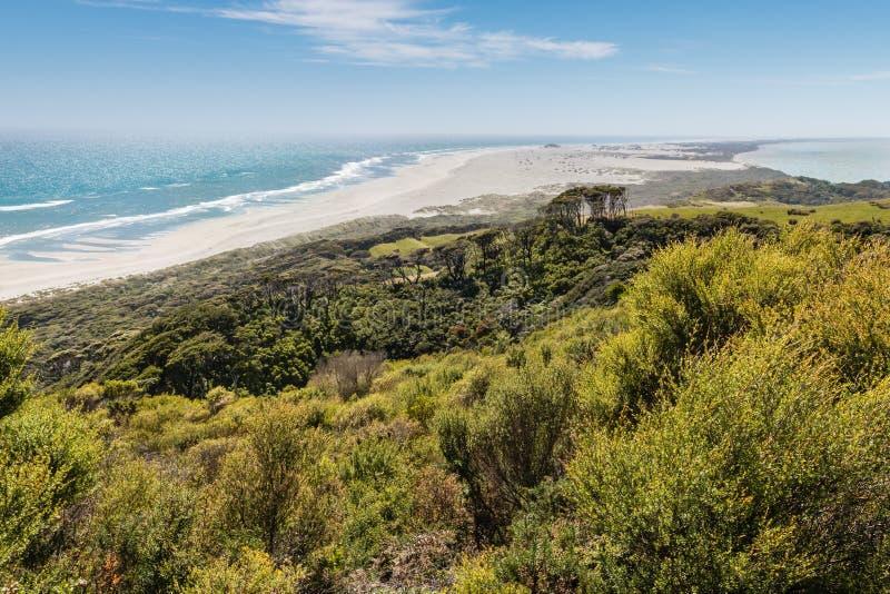 Manuka куст на прощальном вертеле, золотом заливе, Новой Зеландии стоковая фотография
