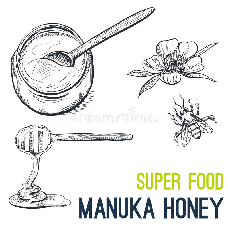 Manuka honey, Super food hand drawn sketch vector vector illustration