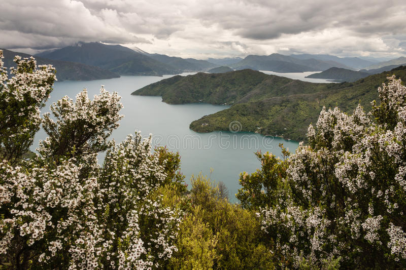 Manuka trees above Queen Charlotte Sound stock photos