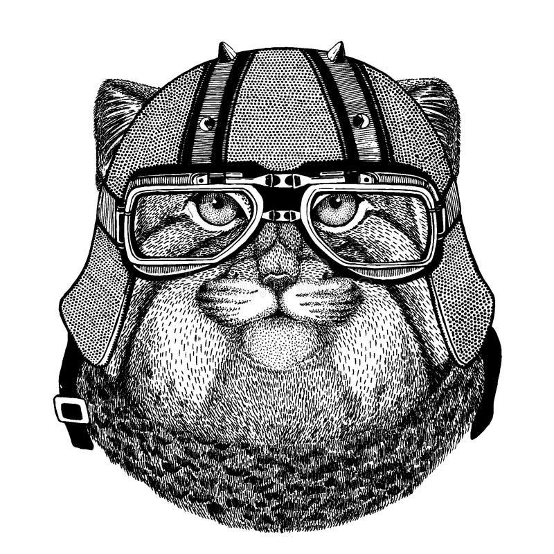 Manul katt som bär en motorcykel, aero hjälm Utdragen bild för hand för tatueringen, t-skjorta, emblem, emblem, logo, lapp stock illustrationer