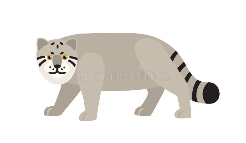 Manul lub paliuszy s kot odizolowywający na białym tle Pełen wdzięku dziki mięsożerny zwierzęcy kraść, tropić lub żerować, royalty ilustracja