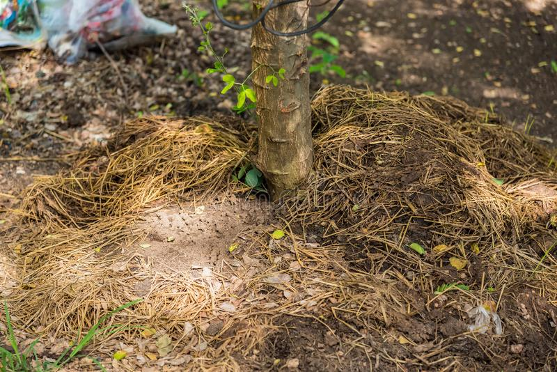 Manure from cow dung under the tree royalty free stock images