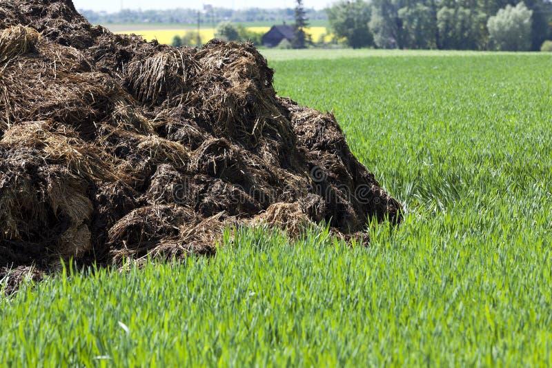 Manure for fertilizer royalty free stock image