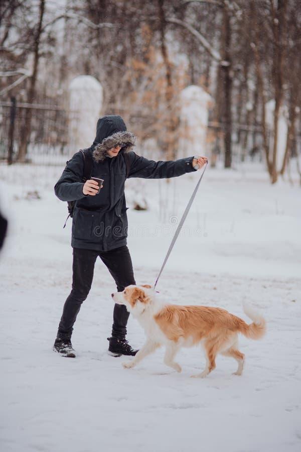 Manutbildning sitter hundpuppeyen border collie i vinter Sn?a dag royaltyfria bilder