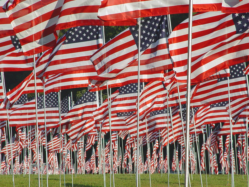 Many American Flags in the Grass stock images