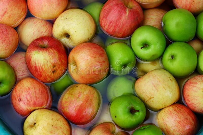 Many apples in different colors in water royalty free stock photo