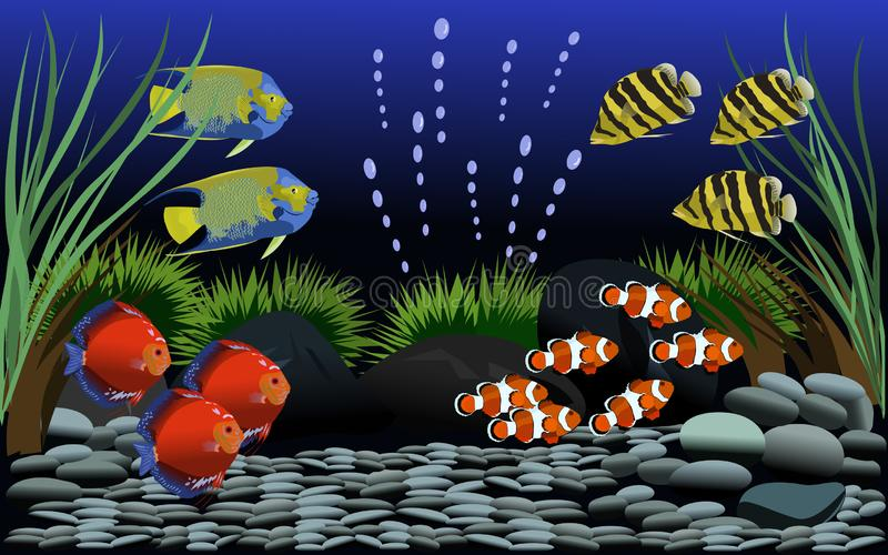 Many beautiful fish in  fish tank with gravel and small trees decorated royalty free illustration