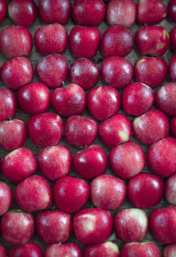 Many beautiful red apples in a box in a supermarket stock images