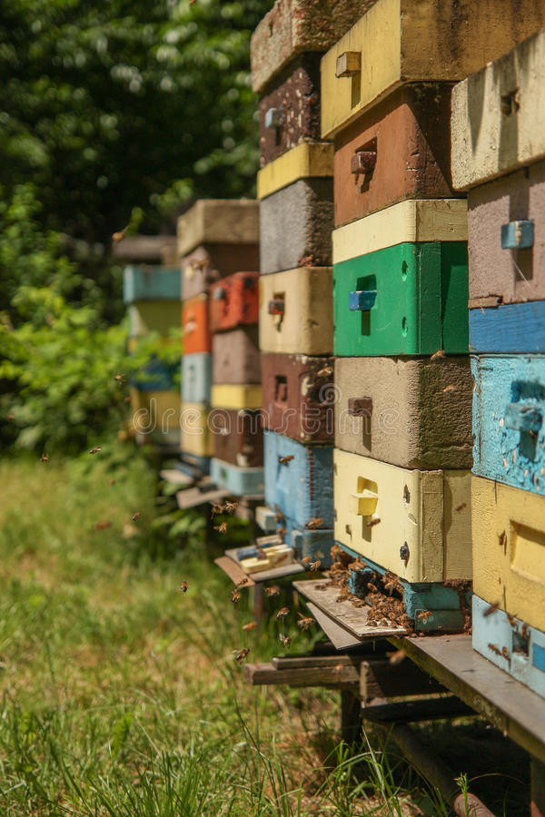 Many bees on beevives royalty free stock image