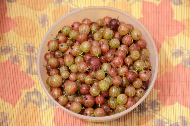 Many berries of ripe gooseberries in plastic dishes, standing on a bamboo mat. stock photo