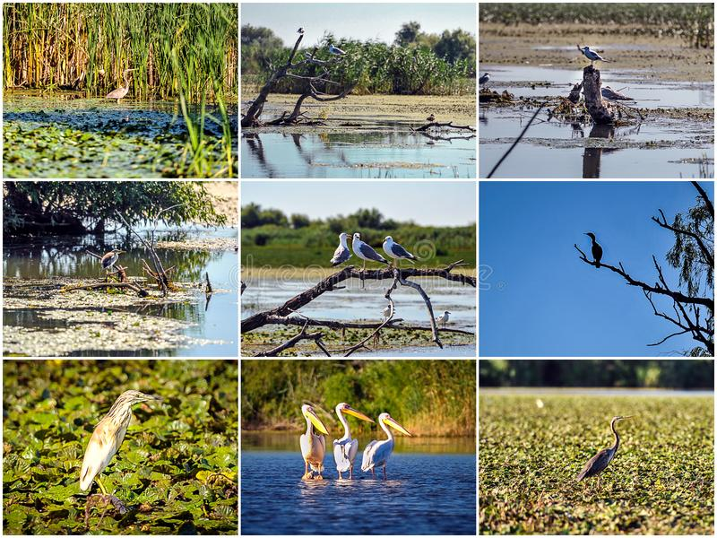 Many Birds of Danube Delta. Birds in the Danube delta during the summer royalty free stock photography