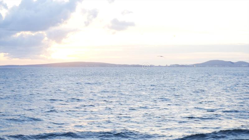 Many birds fly in the air under the evening sky. Stock. White flock of seaguls soaring above blue sea with the sunset stock photo