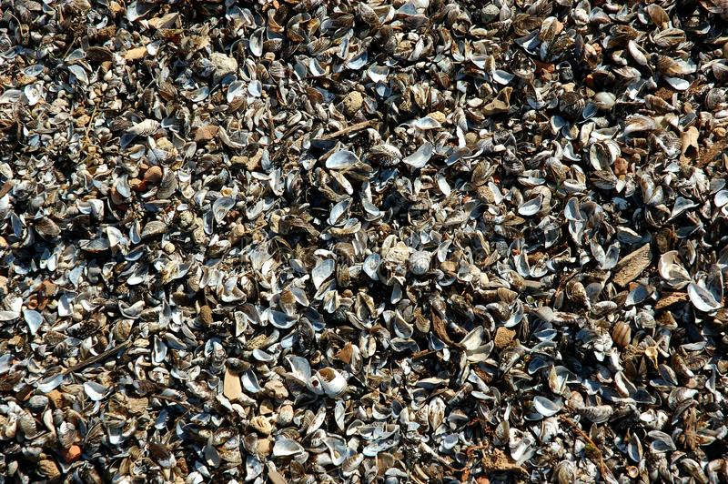 Many broken shells pile up on beach sand stock photos
