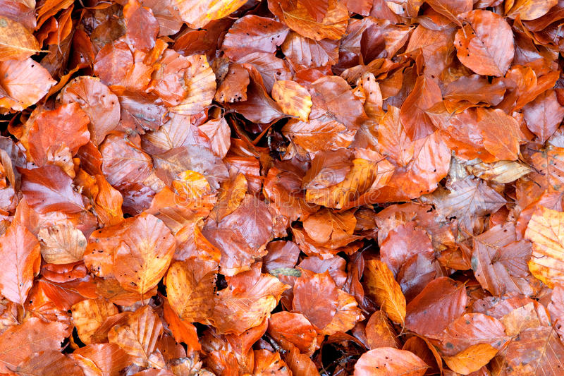 Download Many brown wet leaves stock image. Image of decoration - 27701181