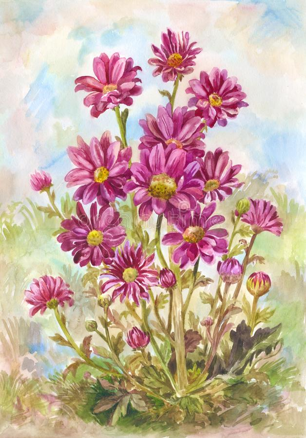 Many burgundy aster or daisies in a clearing, garden or in the forest. Watercolor painting suitable for a postcard or summer. Bouquet of wild purple flowers stock illustration