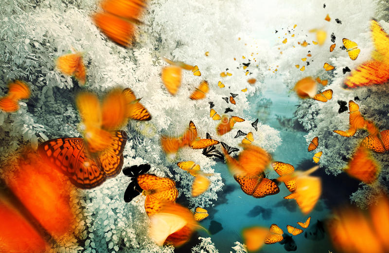 Many butterflies stock photo