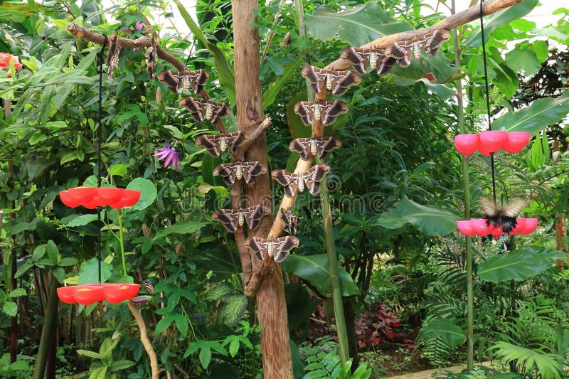 Many butterflies perched on branches royalty free stock images