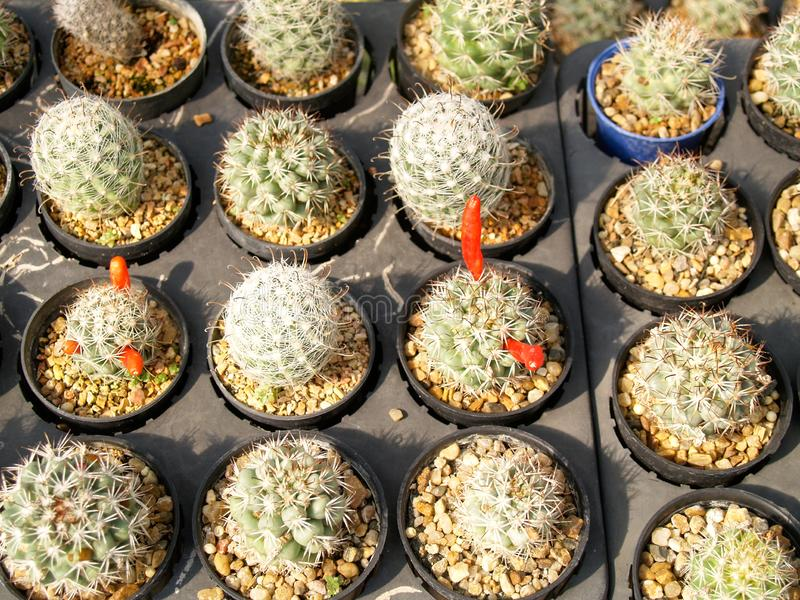Many cactus in the garden royalty free stock photo