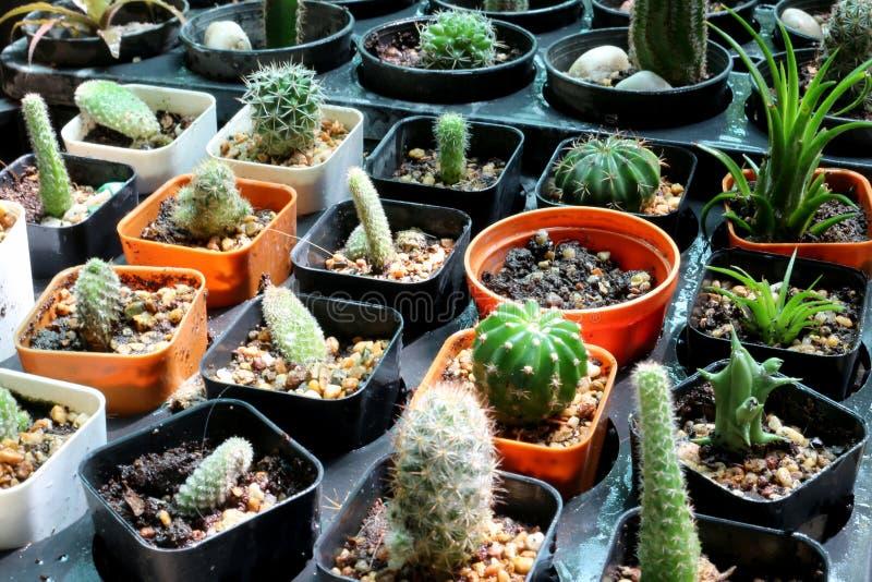 Many cactus stock photo