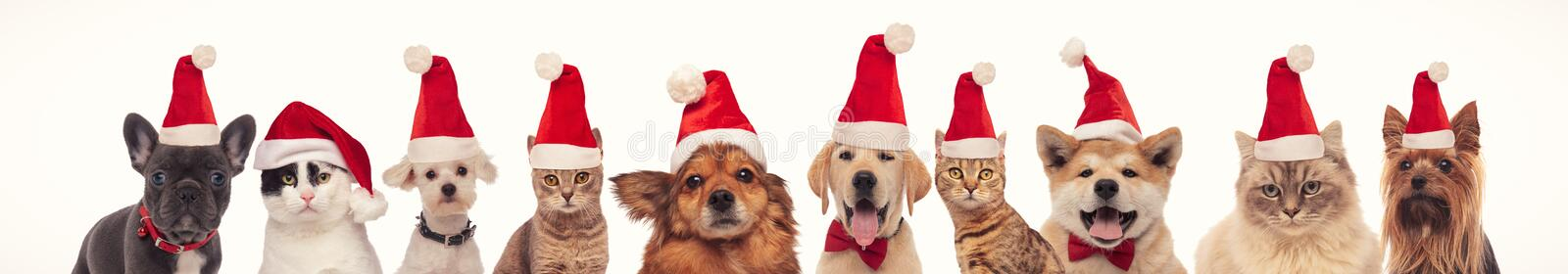 Many cats and dogs wearing santa claus hats for christmas royalty free stock photography