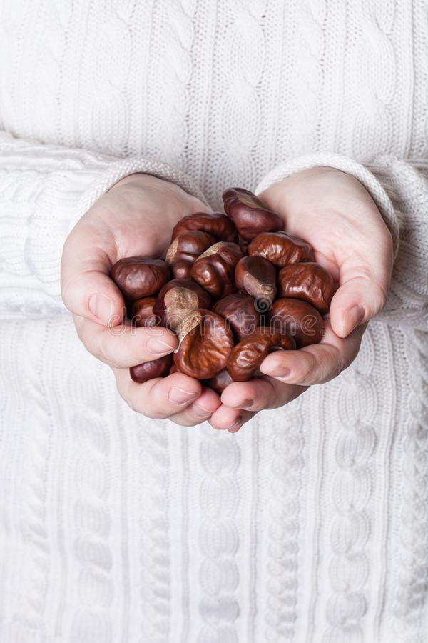 Many chestnuts in human hands royalty free stock photo