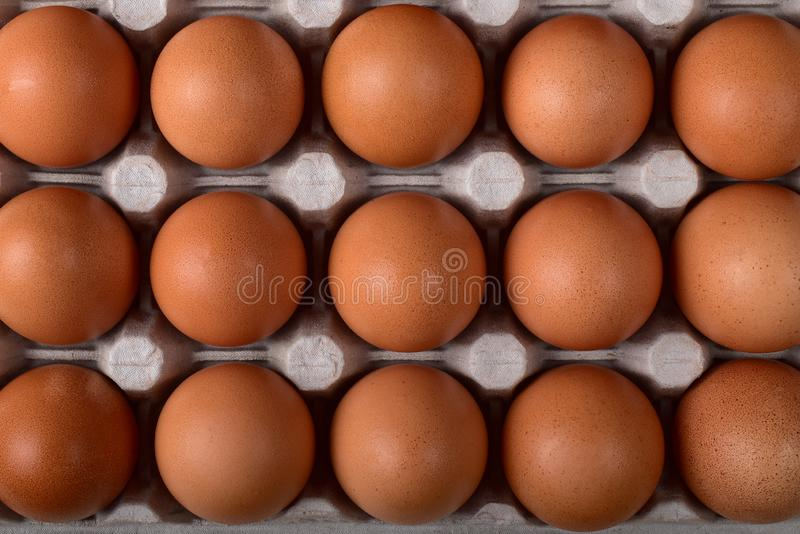 Three even rows of brown chicken eggs in the nests of the carton royalty free stock photography