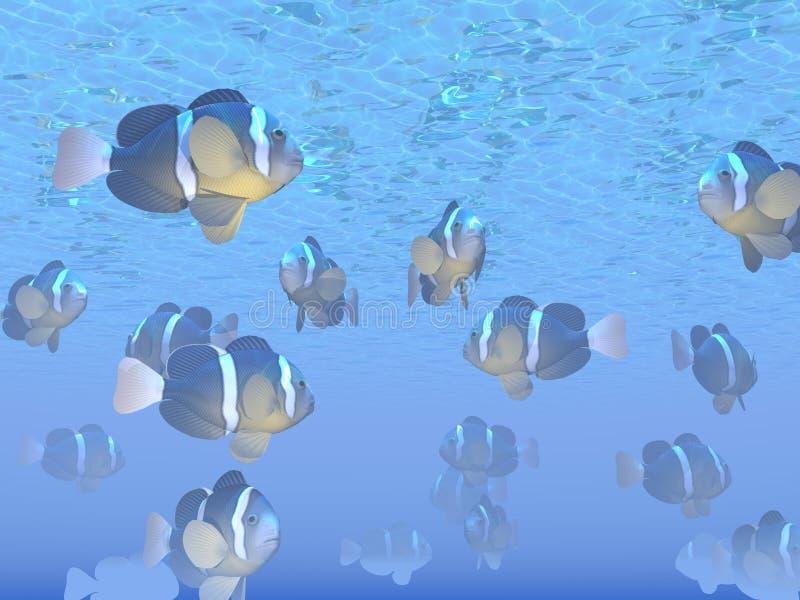 Many Clarks clown fishes - 3D render vector illustration