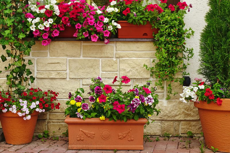Many Clay Flowerpots With Blooming Plants At Stone Wall. Many Clay Flowerpots With Blooming Plants At The Rustic Stone Wall With Window. Ornamental Backyard royalty free stock photos