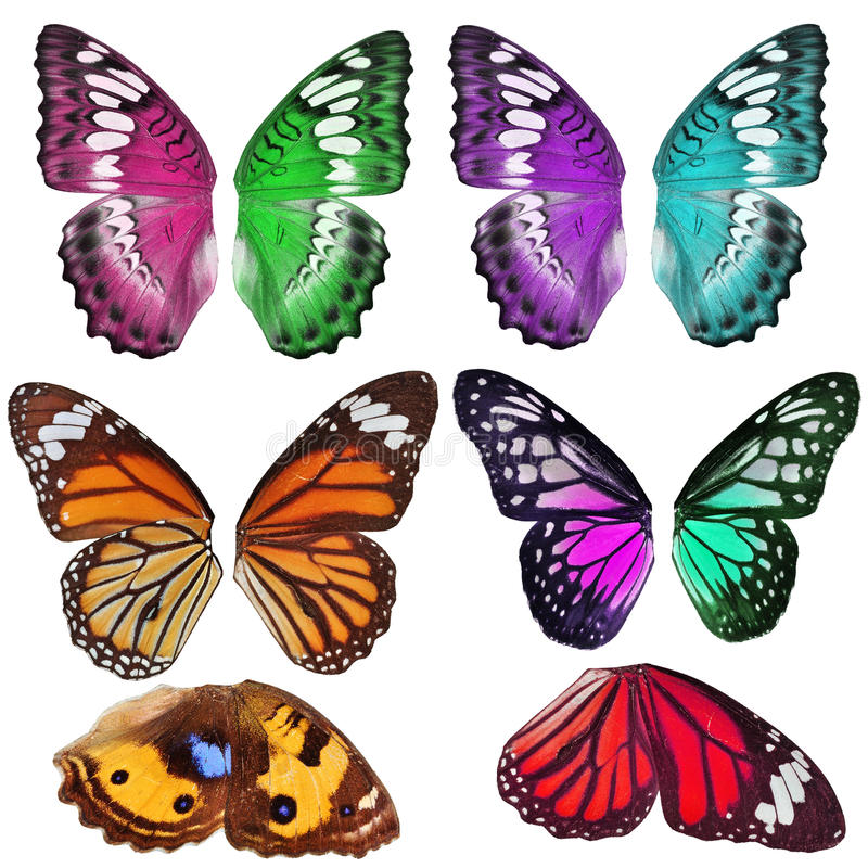 Download Many Colorful Butterfly Wing Stock Image - Image of purple, beauty: 27314787