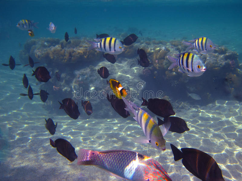 Many colorful fish