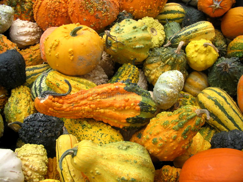 Many crazy coloured pumpkins royalty free stock image