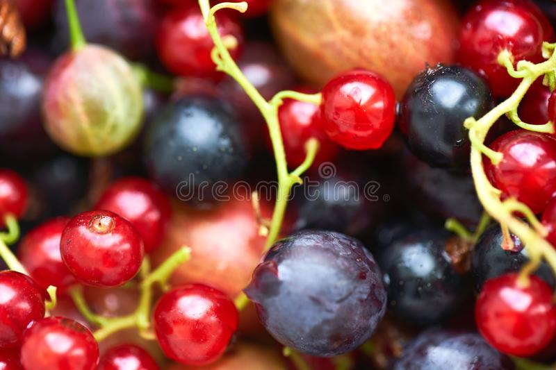 Many different bright berries. summer harvest of fresh berries. a set of berries to make a compote royalty free stock photo