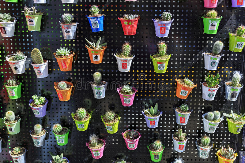 Many different cacti in little pots. Spain, Barcelona. royalty free stock image