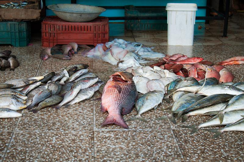 Many different fish big and small on the floor of the fish market. Seafood stock image