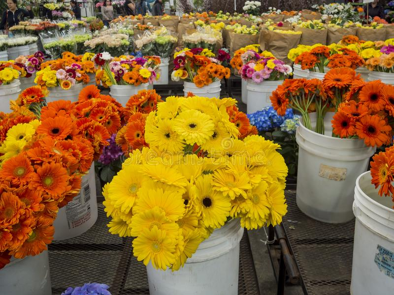 Many different kinds of flowering selling royalty free stock photos