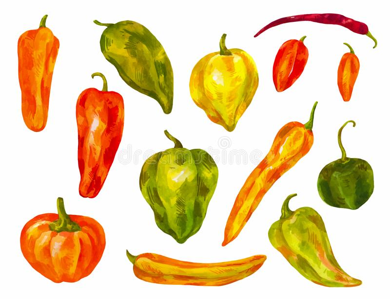 Many different peppers. Watercolor set. Bulgarian, chili, differ. Ent varieties of healthy indredient isolated stock illustration