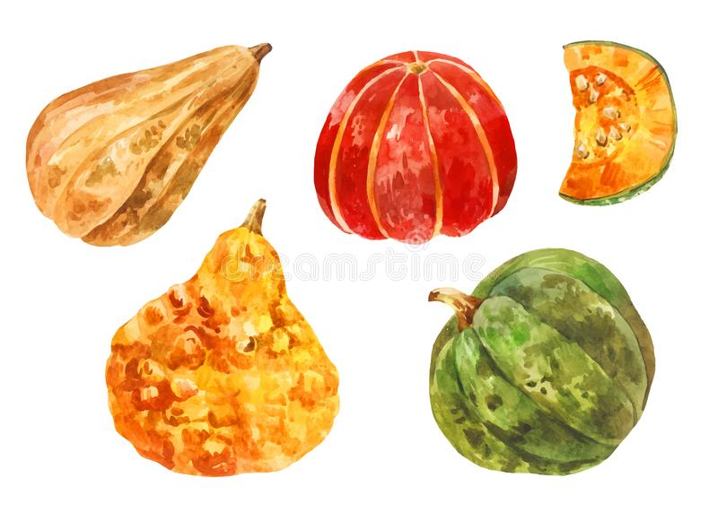 Many different pumpkins. Watercolor set. Yellow, red, green. Different varieties of healthy vegetables. Halloween set. Many different pumpkins. Watercolor set vector illustration