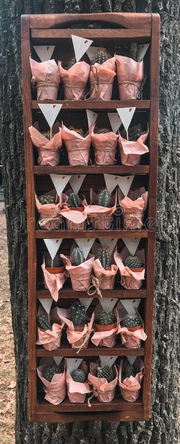 Many different small cactus in a beautiful pink wrappers in a wooden box rustic style royalty free stock photography