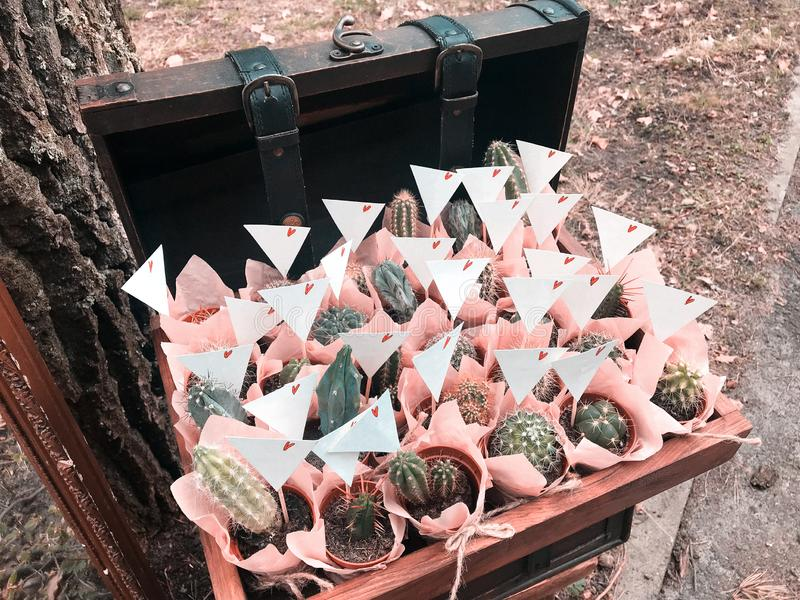 Many different small cactus in a beautiful pink wrappers in a wooden box rustic style royalty free stock photos
