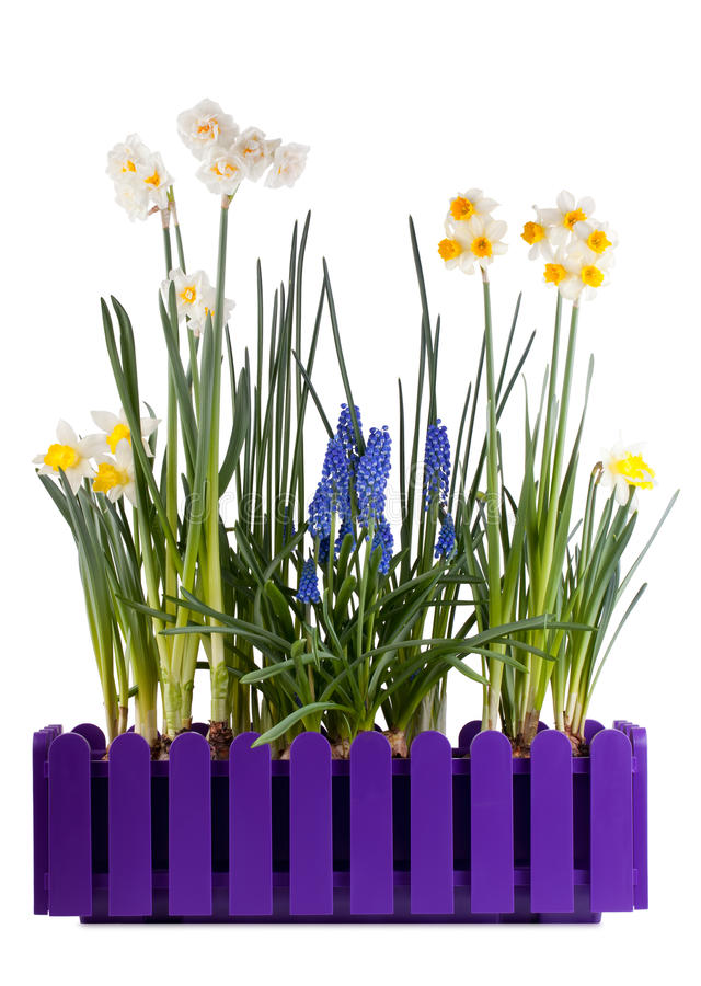 Free Many Different Spring Flowers Stock Photography - 23821142