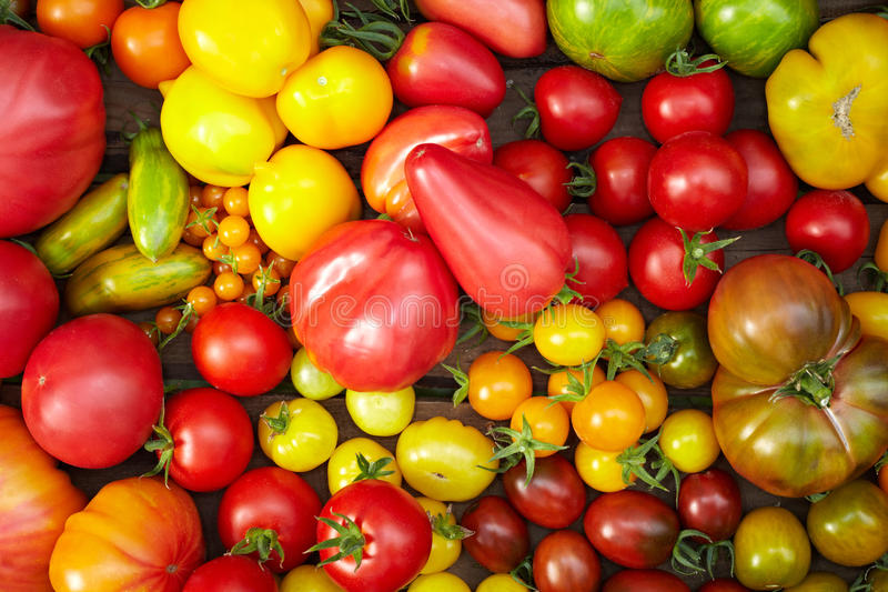 Many different tomato breeds royalty free stock images
