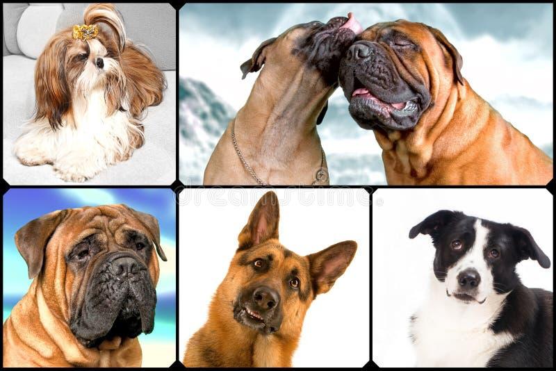Many dogs royalty free stock photography