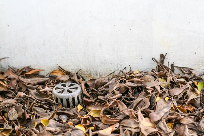 Many dry leaves clogged the drain, causing water to leak inside the building royalty free stock images