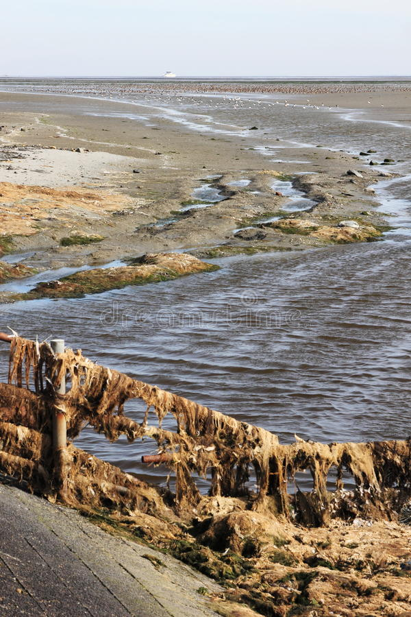 Many ducks during ebbtide in Waddenzee near dutch Ameland stock photos