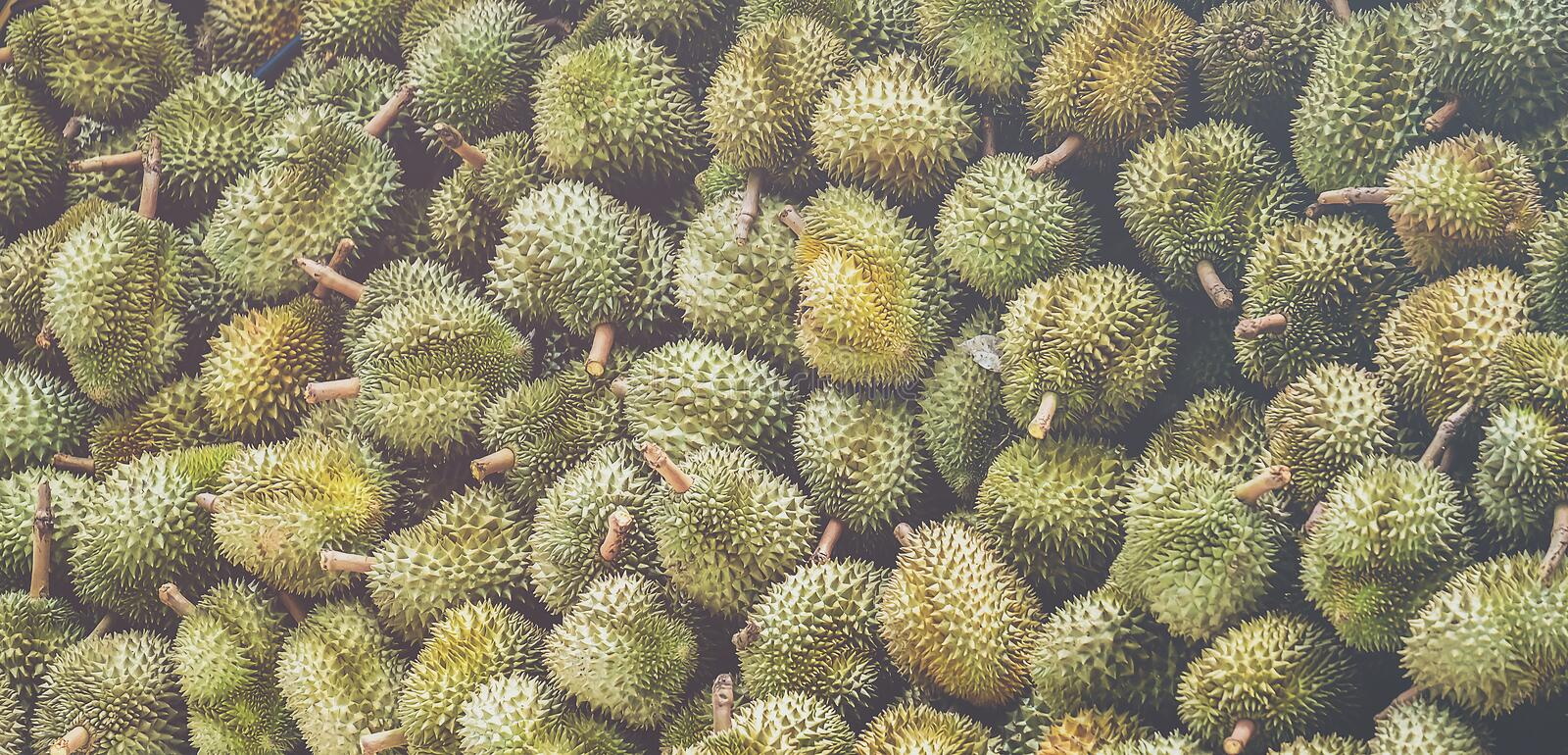 Many durians are lined like mountains. Many durians are lined like mountains stock image
