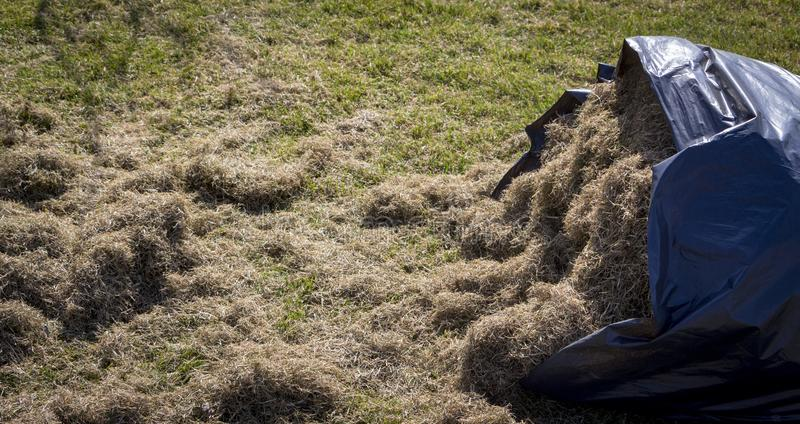 Many felts on green grass after aeration of the lawn. Close up stock photo