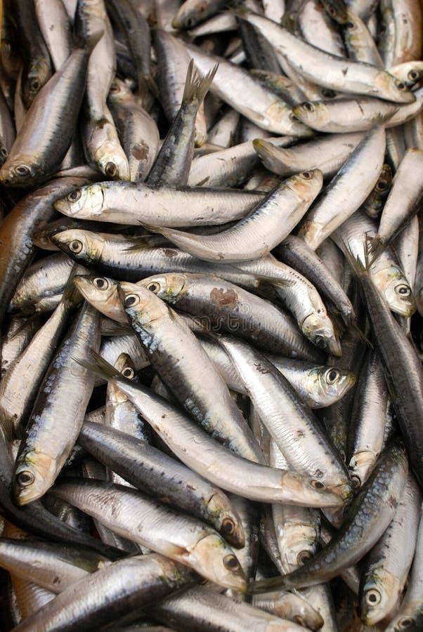 Many fish royalty free stock photos