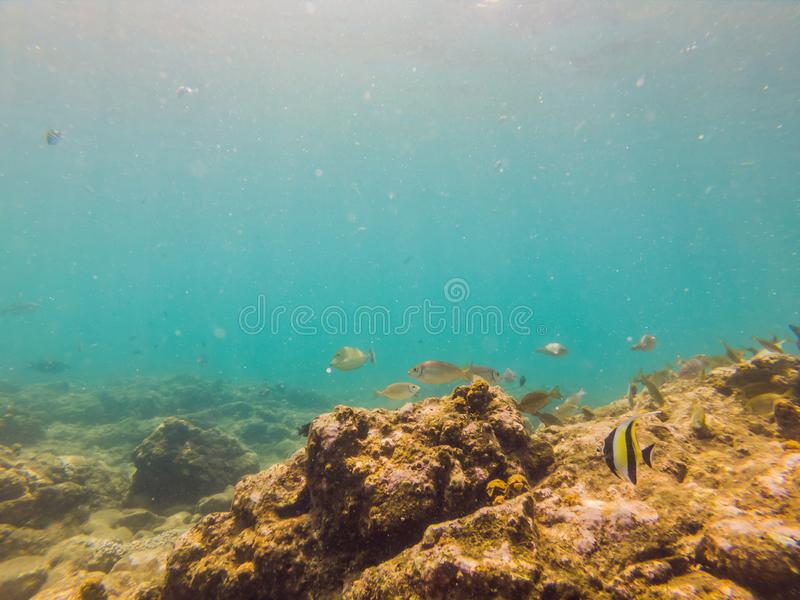 Many fish, anemonsand sea creatures, plants and corals under water near the seabed with sand and stones in blue and stock photo