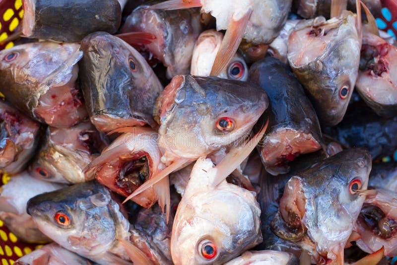 Many fish heads stock photo